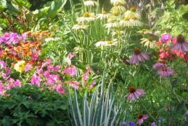 1f56_perennial-garden