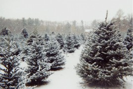 Christmas-Tree-Farms-2