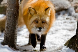 Muskoka Wildlife Centre