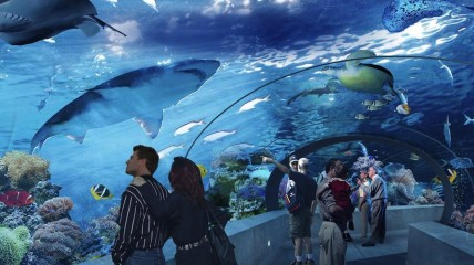 ripley's aquarium of canada (toronto)